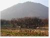 長野県黒姫開拓地の畑