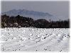 大根畑に雪が積もる
